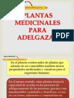 Plantas Medicinales Para Adelgazar