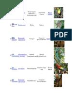 Aves y Flrores Nacionales de Centro America