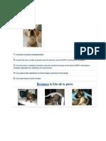 Vacunas Que Se Le Debe de Poner a Un Cachorro