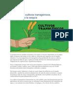 Dos nuevos cultivos transgénicos.pdf