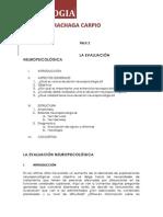 Neuropsicología i (2)