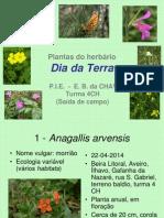 Plantas Do Herbario - Saída de Campo - Dia Da Terra
