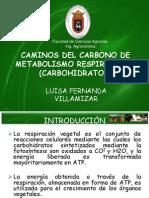 Caminos Del Carbono de Metabolismo Respiratorio