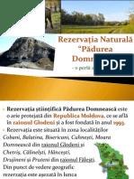 Rezervatia Padurea Domneasca