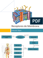 Presentacion Receptores de Membrana