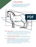 Planos anatómicos (Autoguardado).docx