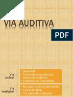Vía Auditiva