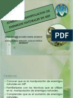 Aumento y Manipulacion de Enemigos Naturales en Mip