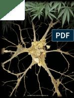 Endocannabinoides cerebrales paper ingles