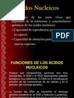 ACIDOS_NUCLEICOS