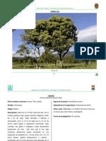 Arboles de Chiapas