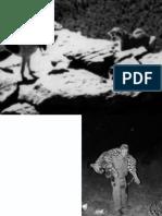 DEM_TROPHYHUNT fronte