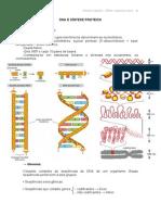 DNA e Síntese Protéica.pdf
