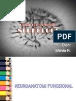 Anatomi Fungsional Sistem Saraf Manusia
