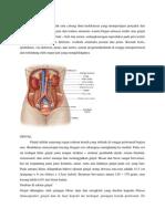 anatomi urigenital