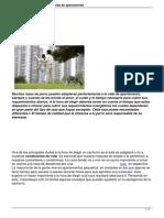 Las 10 Mejores Razas Adecuadas Para La Vida de Apartamento