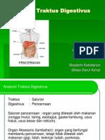 Anatomi Traktus Digestivus