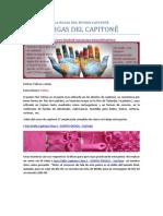 LA MAGIA DEL MUNDO CAPITONÊ-Fofoca-ondas(5).pdf