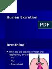 Human Excretion