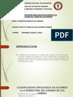 Clasificasion Sinologica Internacional