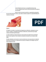 Desgarro Muscular (2)