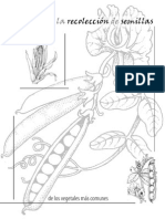 Guía para la Recolección de Semillas de los Vegetales Más Comunes (Seed Savers' Handbook)