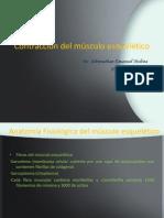 contraccindelmsculoesquelticodr-140310230433-phpapp01