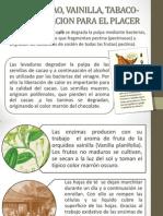 Café, Cacaco, Vainilla, Tabaco- Fermentacion
