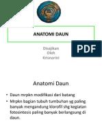 daun anatomi