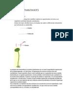 Resumen Prueba Parcial N1 Biología