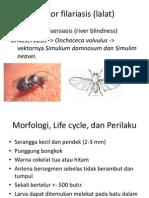 Vektor Filariasis (Lalat)