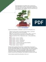 El Género Morus Esté Emparentado Con El Género Ficus a Través de La Familia de Las Moráceas