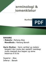 Nomenklatur & Terminologi
