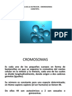CROMOSOMAS2