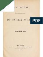 Bosca (1916)-Un Género Nuevo Para La Fauna Herpetològica de España y Especie Nueva o Poco Conocida (Algiroides)