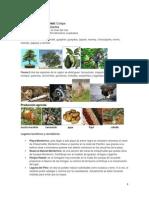 Departamentos de Guatemala Datos e Imagenes