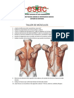 Taller de Músculos Recuperación