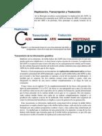 Replicacion Transcripcion y Traduccion ADN
