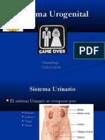 8. Sistema Urogenital