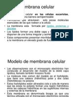 1 Membrana Celular