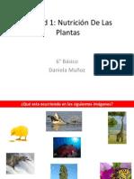 Nutricion de Las Plantas