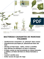 Bacterias Final 2013