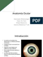 Anatomía Ocular Felipe