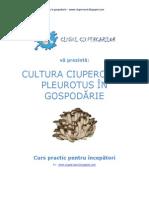Cultura Buretilor Pleurotus in Gospodarie