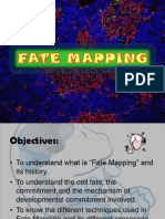 Fate Mapping