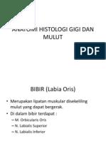 Anatomi Histologi Gigi Dan Mulut