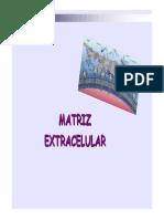 12_29 Matriz Extracelular _5bsólo Lectura_5d