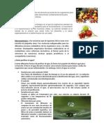 Alimentación Es La Ingestión de Alimento Por Parte de Los Organismos Para Proveerse de Sus Necesidades Alimenticias
