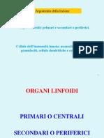 3  Organi_e_cellule