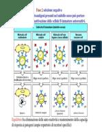 16 linfociti_B__Parte3